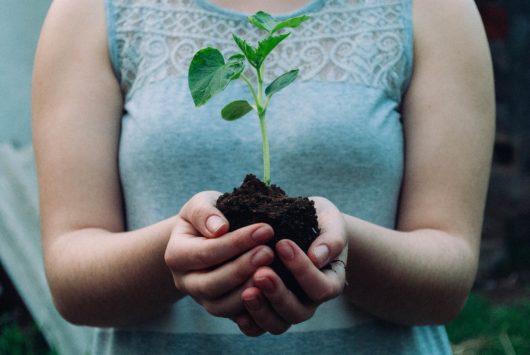 Team building vert : plantation d'arbres